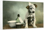 Dog in bandages by Anonymous