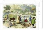Chinese harvest, Hong Kong by Anonymous