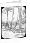 General Gordon's Garden, Khartoum, Sudan by Newton & Co