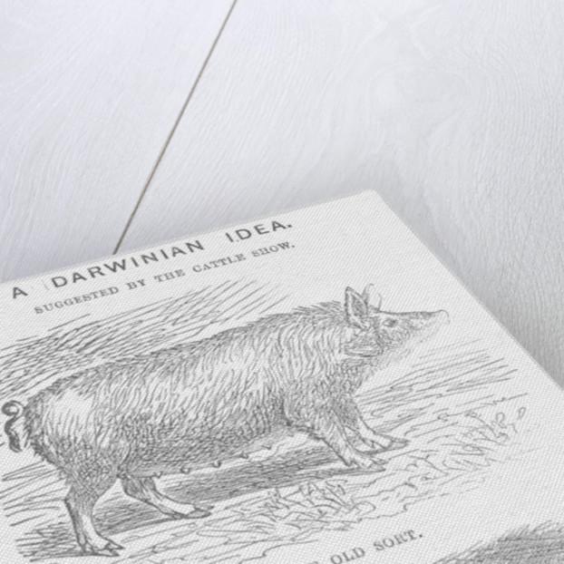 A Darwinian Idea by TW Woods
