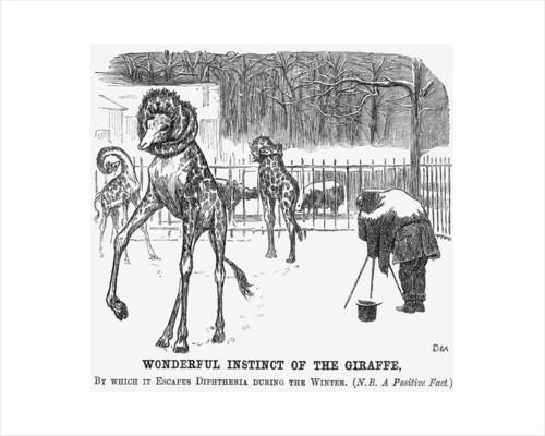 Wonderful Instinct of The Giraffe by George du Maurier