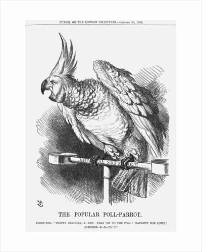 The Popular Poll-Parrot by John Tenniel