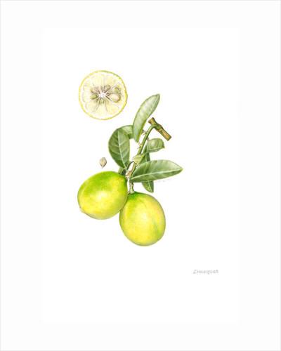Citrus limequat (Kumquat) by Celia Crampton