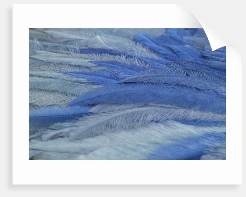 Blue ostrich feather fan, 1933 by Unknown
