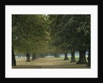 Home Park, Hampton Court Palace by Vivian Russell