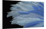 Blue ostrich feather fan, 1933 by Unknown
