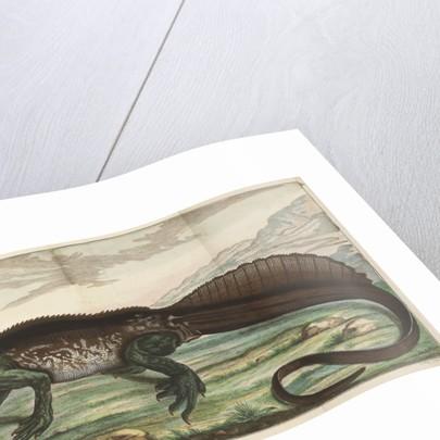 Sailfin lizard by Simon Fokke