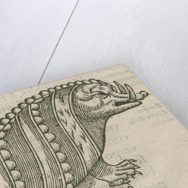 'Figure du Poisson ayant la teste d'un Porc sanglier' by Anonymous