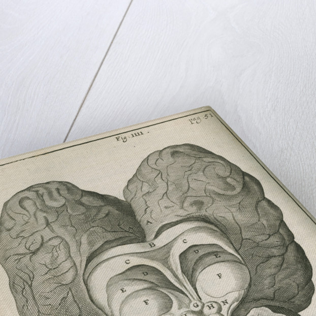 The base of the human brain by unknown
