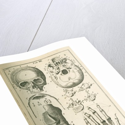 'The fore view of the skull' by Sutton Nicholls