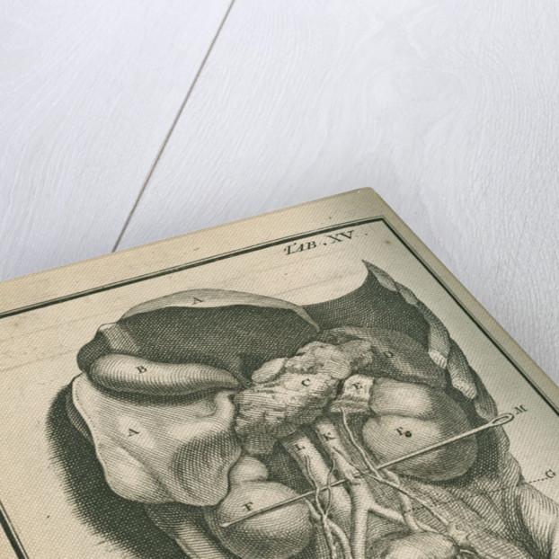 The internal organs by Gerard Vandergucht