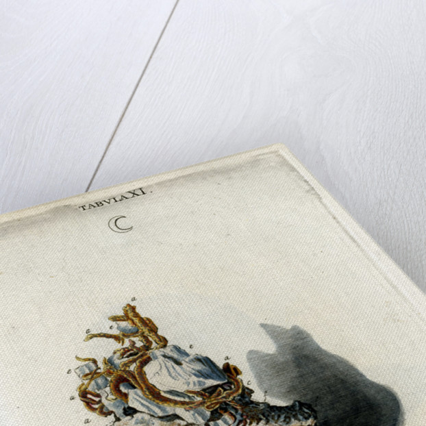 Silver by Johann Michael Seligmann