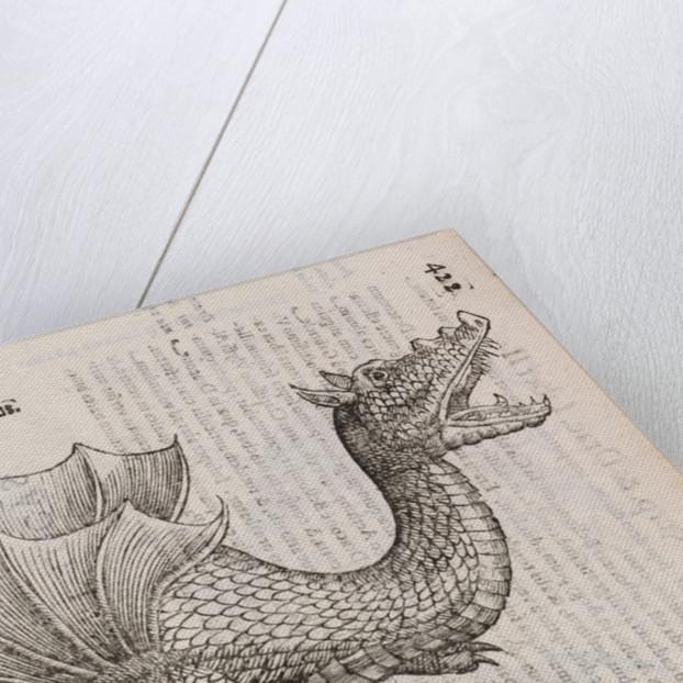 An 'Ethiopian dragon' by unknown