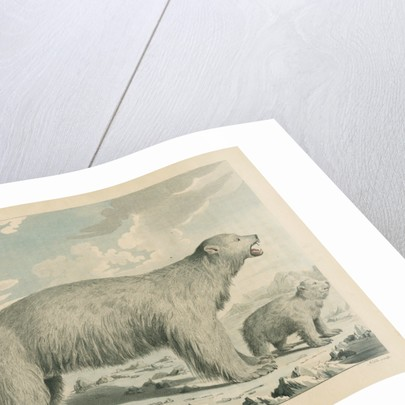 'The Polar Bear' by George Noble
