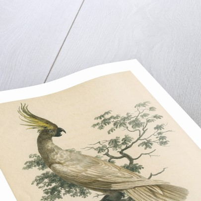 'The Crested Cockatoo' by Sarah Stone