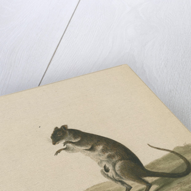 'A Poto Roo' by Sarah Stone