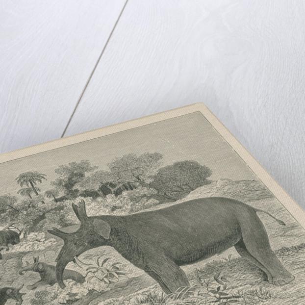 'Loxolophodon cornutus' by Edwin Sheppard