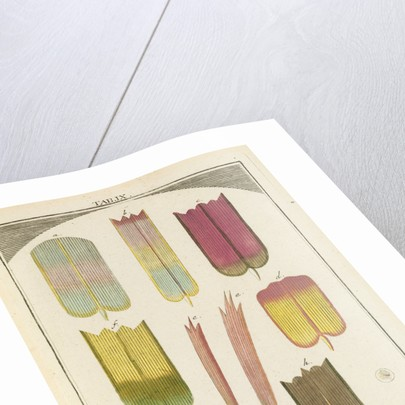 Butterfly wing scales by Martin Frobene Ledermuller