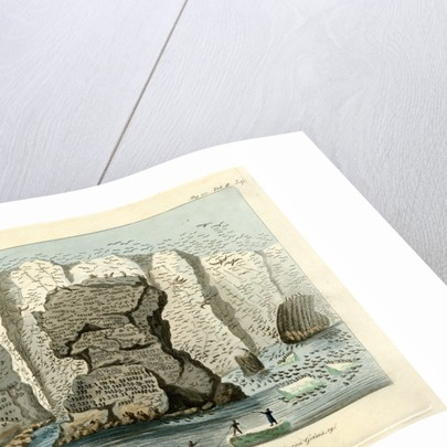 Sea bird colonies of Grimsey by Friedrich Eduard Müller