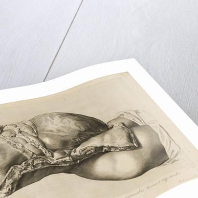Human gravid uterus by II Scotin