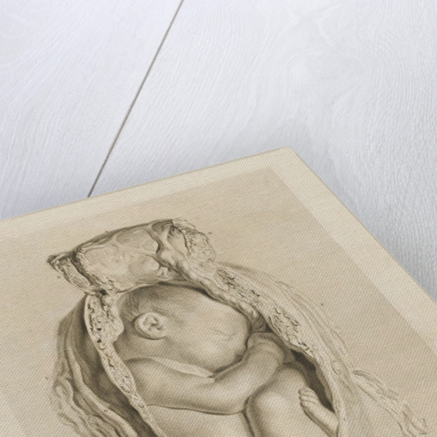 Foetus in the womb by Christian von Mechel