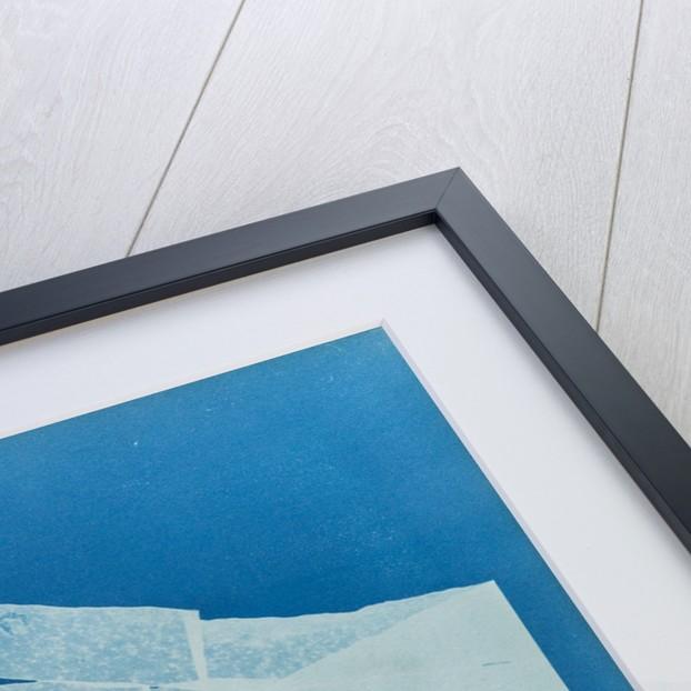 Kelp by Anna Atkins