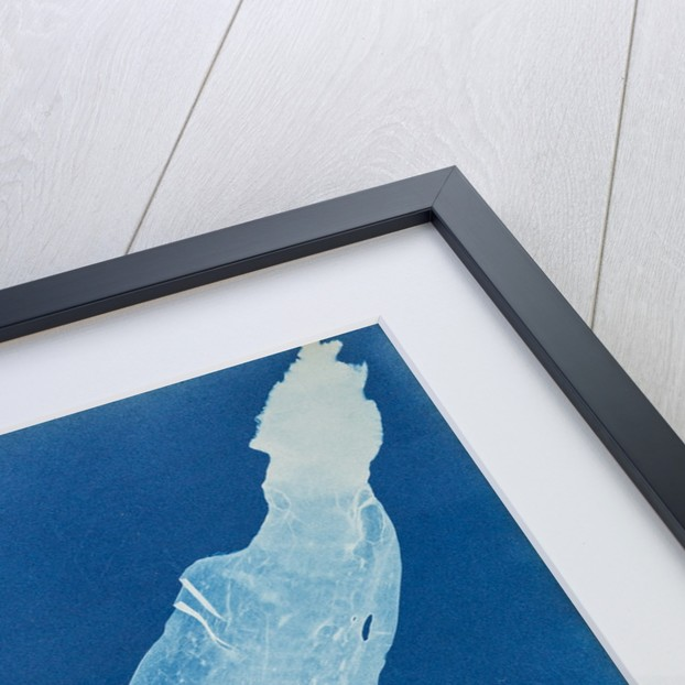 Sea belt by Anna Atkins