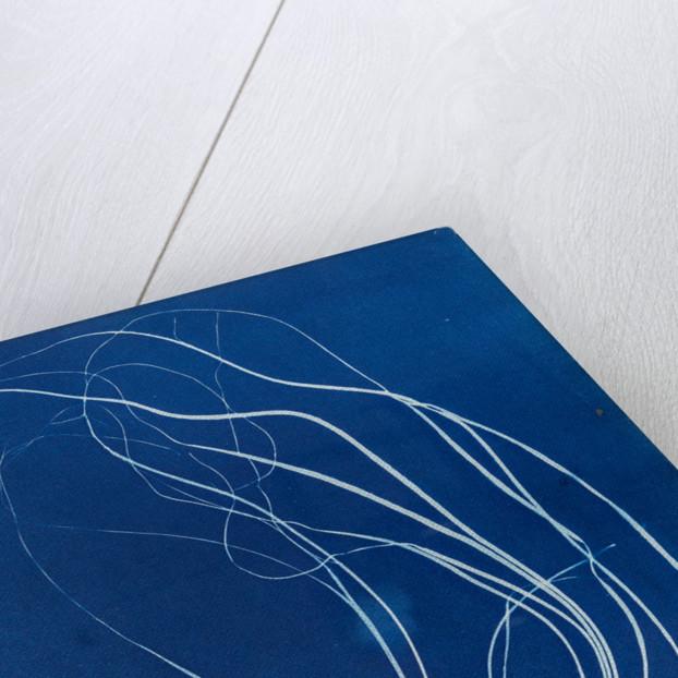 Sea lace by Anna Atkins