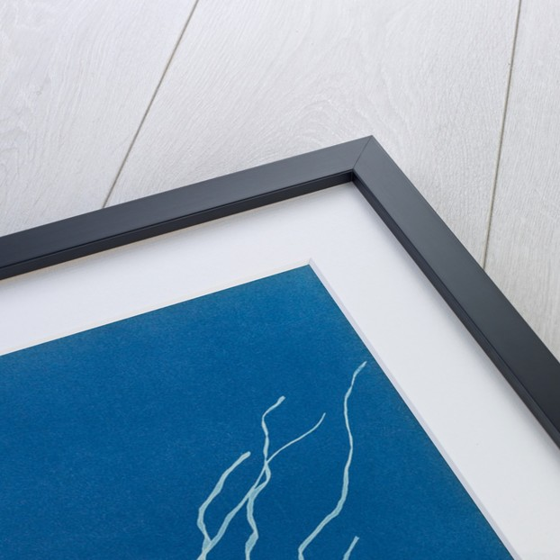 Dumont's tubular weed by Anna Atkins