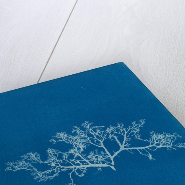 Berry wart cress by Anna Atkins