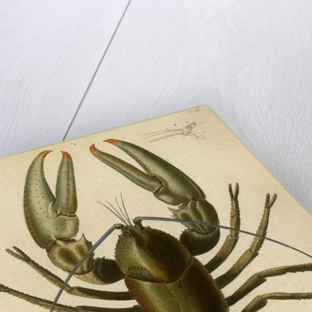 Crayfish by Baron
