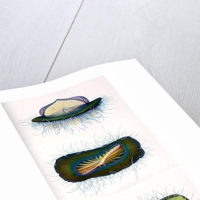 Sea raft by A Meissel