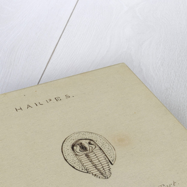 Harpes, genus of trilobite by Henry James