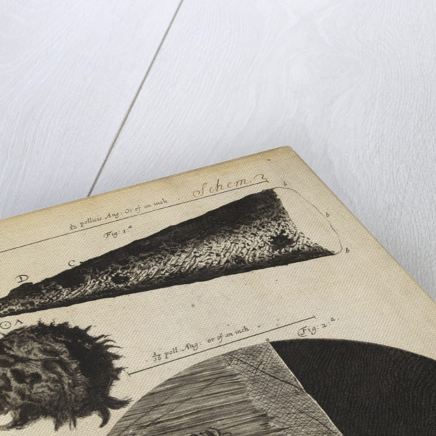 Microscopic views of the point of a needle; printed full-stop; edge of razor by Robert Hooke