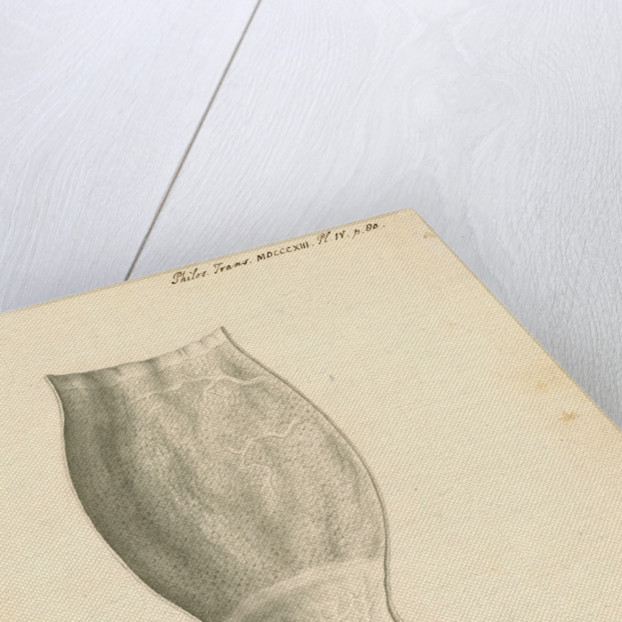 Cassowary [gizzard] by John Howship