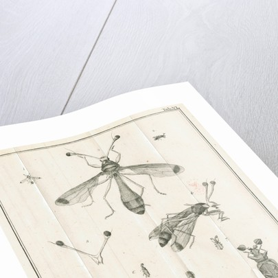 Insects from Linnaeus's 'Academic delights' by Johann Rudolf Schellenburg