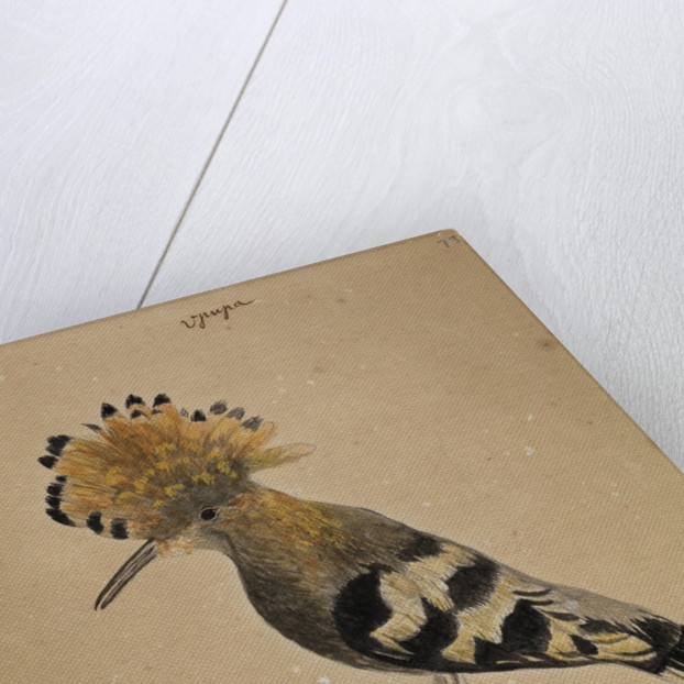 Hoopoe bird by Henry Hunt