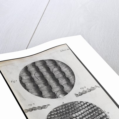 Microscopic view of silk and taffeta by Robert Hooke