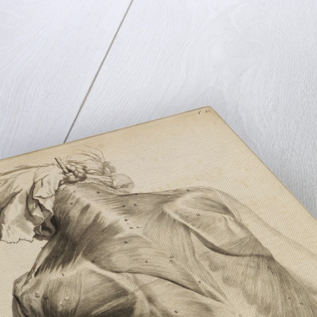 Back muscles by Gerard de Lairesse