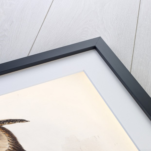 Eagle Owl by Edward Lear