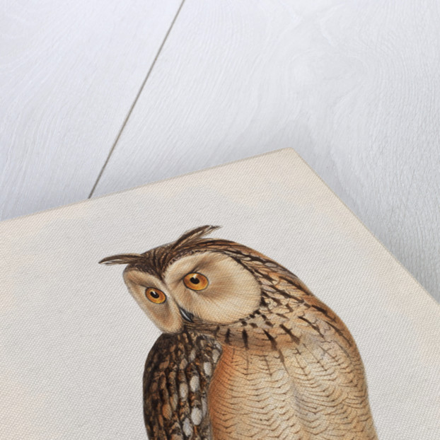 Eastern Great Horned Owl by Edward Lear