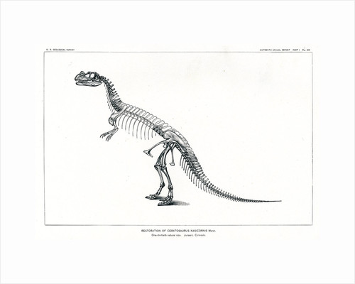 'Ceratosaurus nasicornis' by Unknown