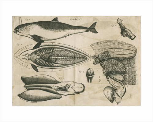 Anatomy of the porpoise by Anonymous