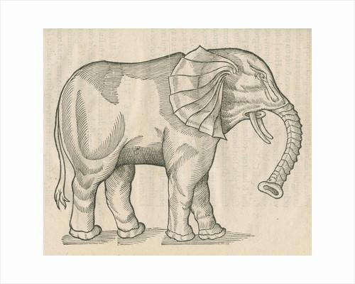 'Figure d'un Elephant' by Anonymous