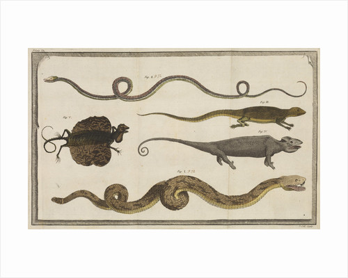 Five specimens of reptiles by T Cole