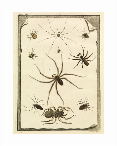 Ten specimens of spiders by T Cole