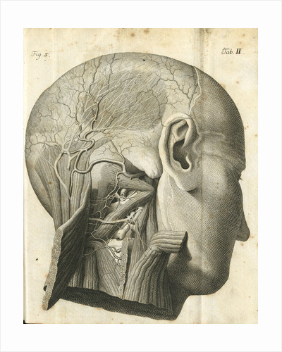 The anatomy of the neck and back of the head by unknown