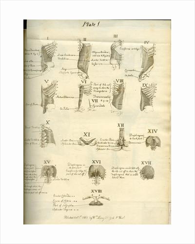 Muscles of the human torso by Joseph Constantine Carpue