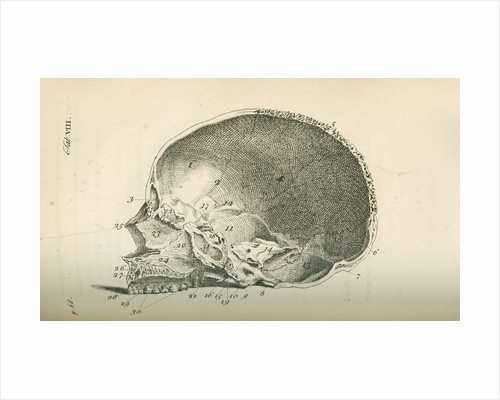 The inside of a skull sawed longitudinally by unknown