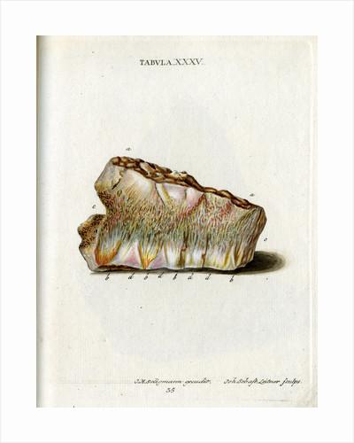 Zeolite by Johann Sebastian Leitner